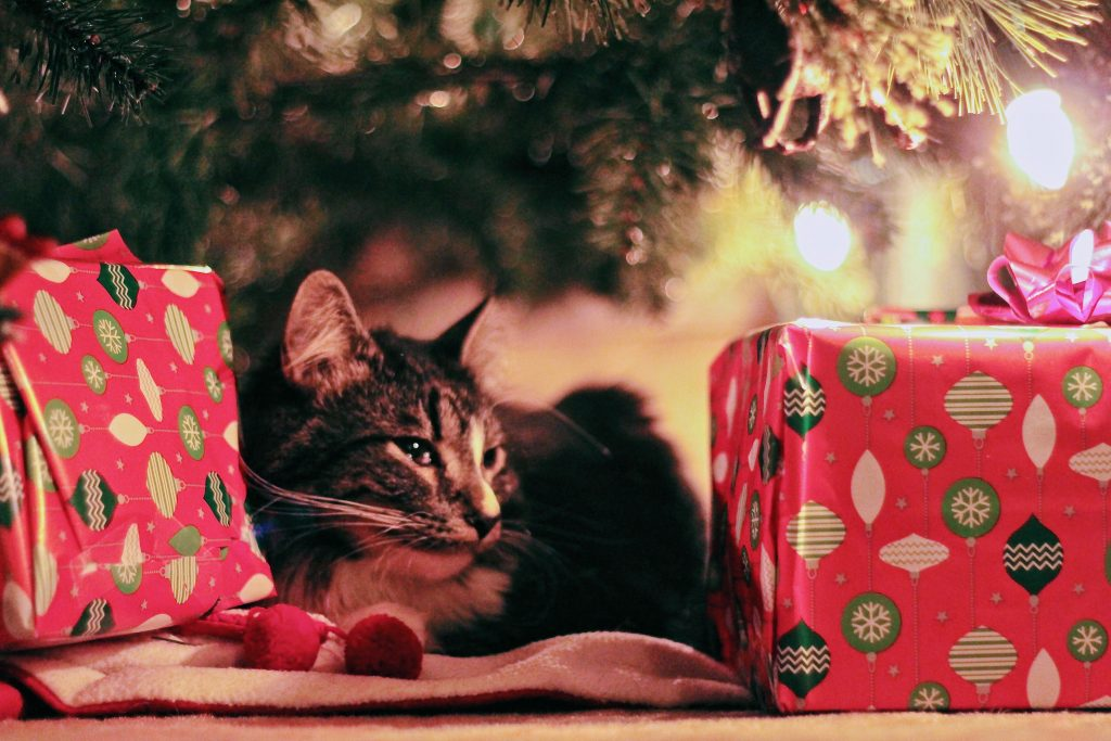 Holiday Tips: How to Prep Your Home for Pets
