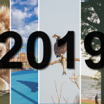 2019 in Review: 7 Great Things That Happened in Our Community